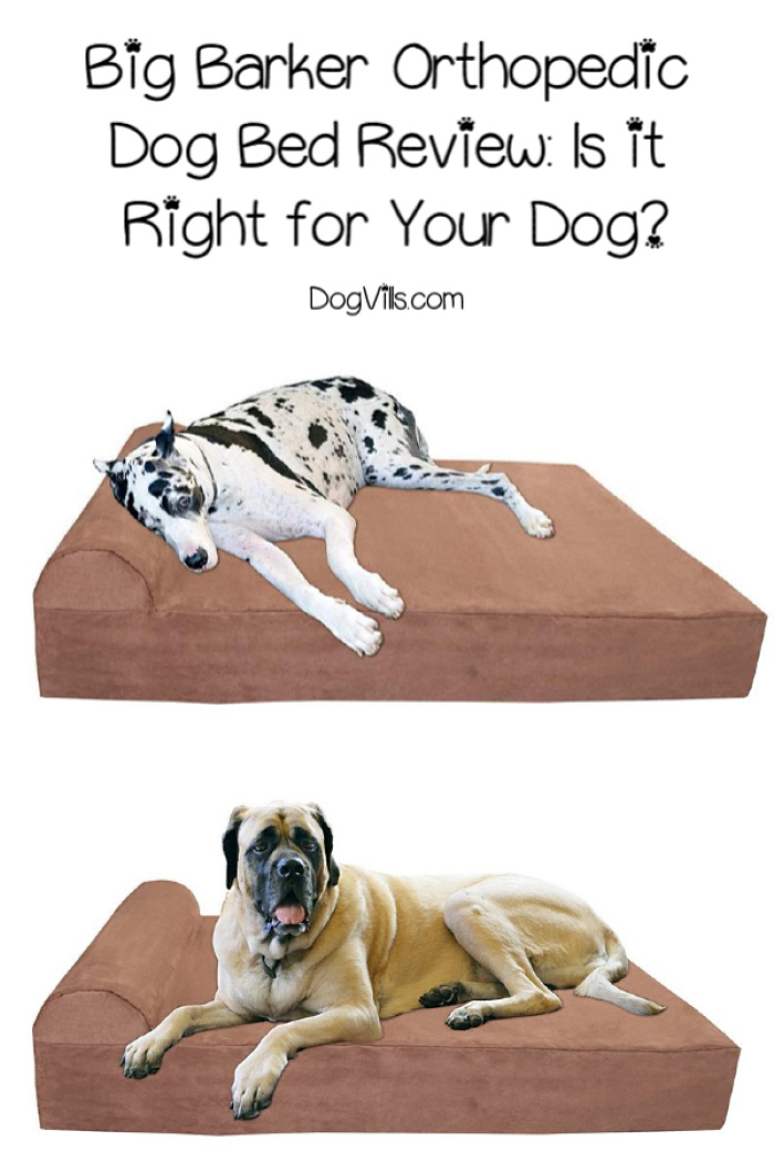Big Barker Orthopedic Dog Bed Review: Is it Right For Your Dog?