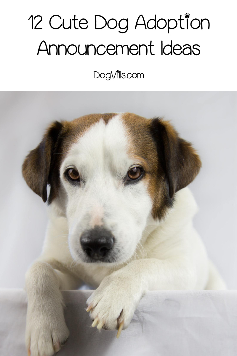 12 Cute Dog Adoption Announcement Ideas Http Www Dogvills Com