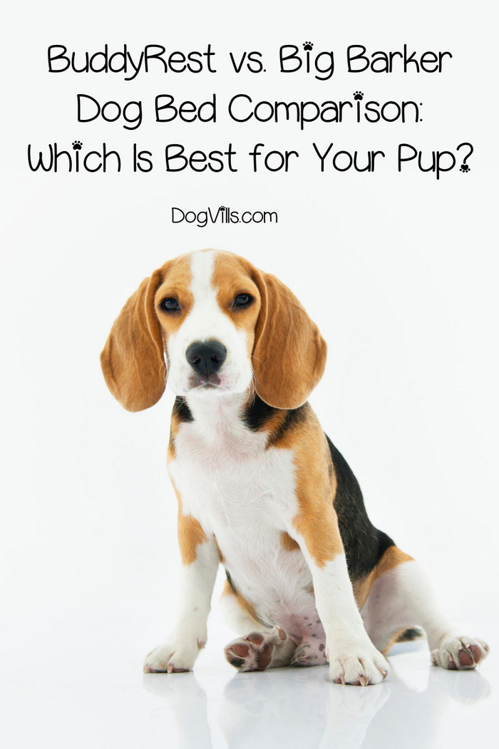 BuddyRest vs. Big Barker Dog Bed Comparison: Which Is Best?