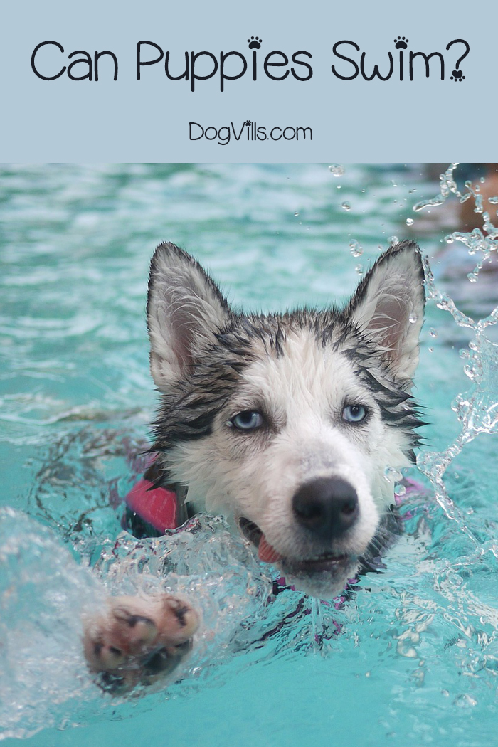 Can Puppies Swim? Answering an Often Asked Question