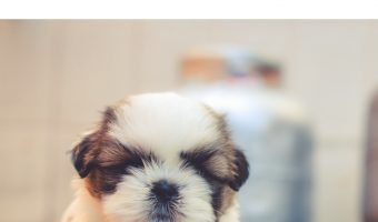 Raising a puppy can be very rewarding, but it is also a lot of work. Is it worth it in the end? Read on to find out what to expect!