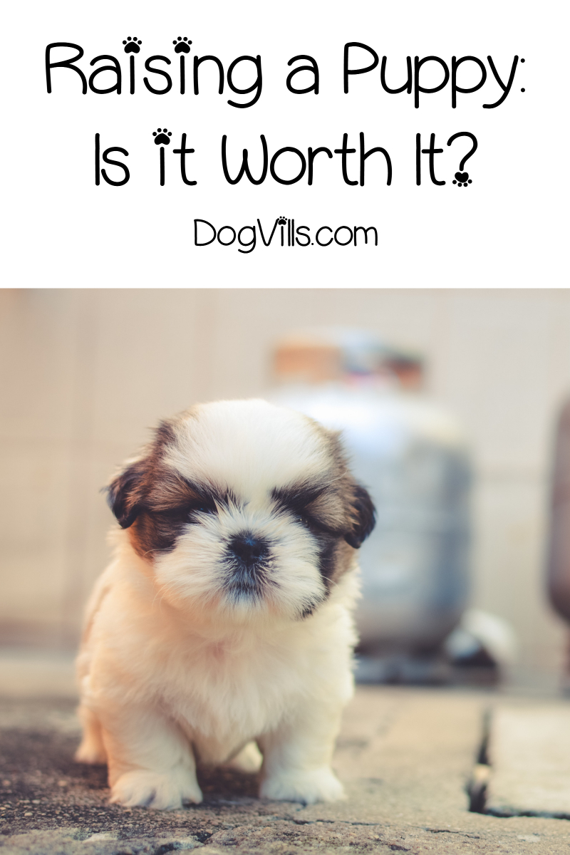 Raising a Puppy – Is it Worth it?