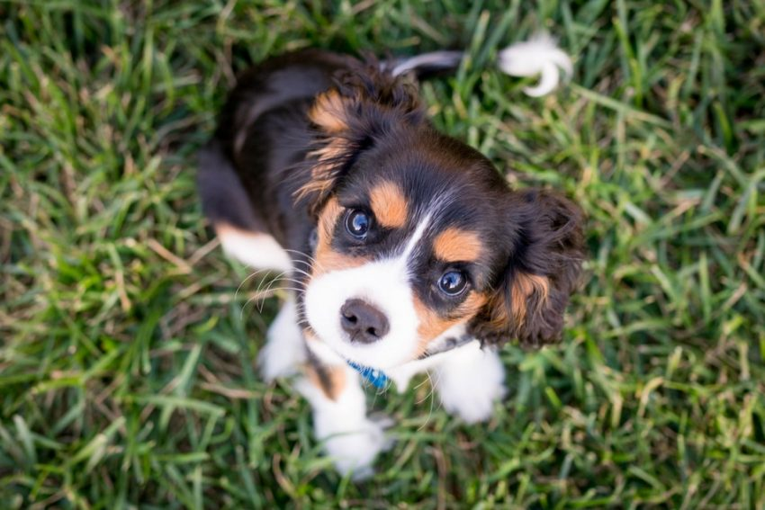 How do you know if your puppy has worms? Find out the answer, plus learn how you can protect your dog from getting worms in the first place.