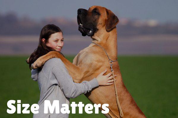 size mattersBuddyRest vs. Big Barker Dog Bed Comparison_ Which Is Best_