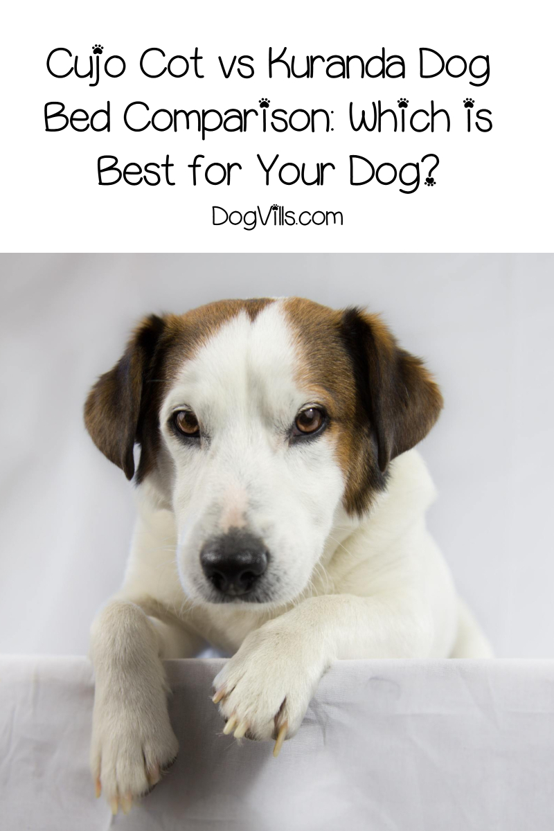 Cujo Cot vs Kuranda Dog Bed Comparison: Which is Best for Your Dog?