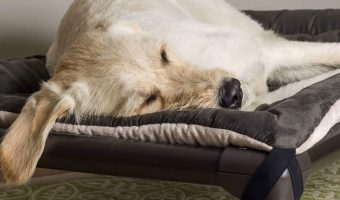 Our Kuranda dog bed review covers everything you need to know about this popular chew-resistant bed! Check out features, pros, cons and more!