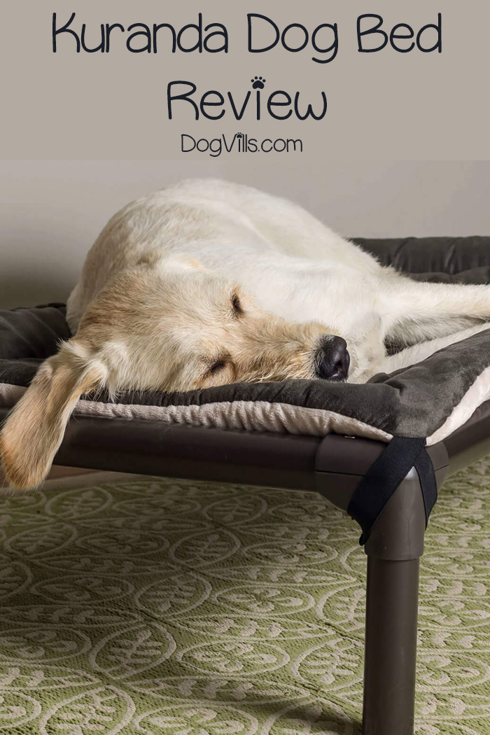 Kuranda Dog Bed Review: Which Style is Right for Your Dog?