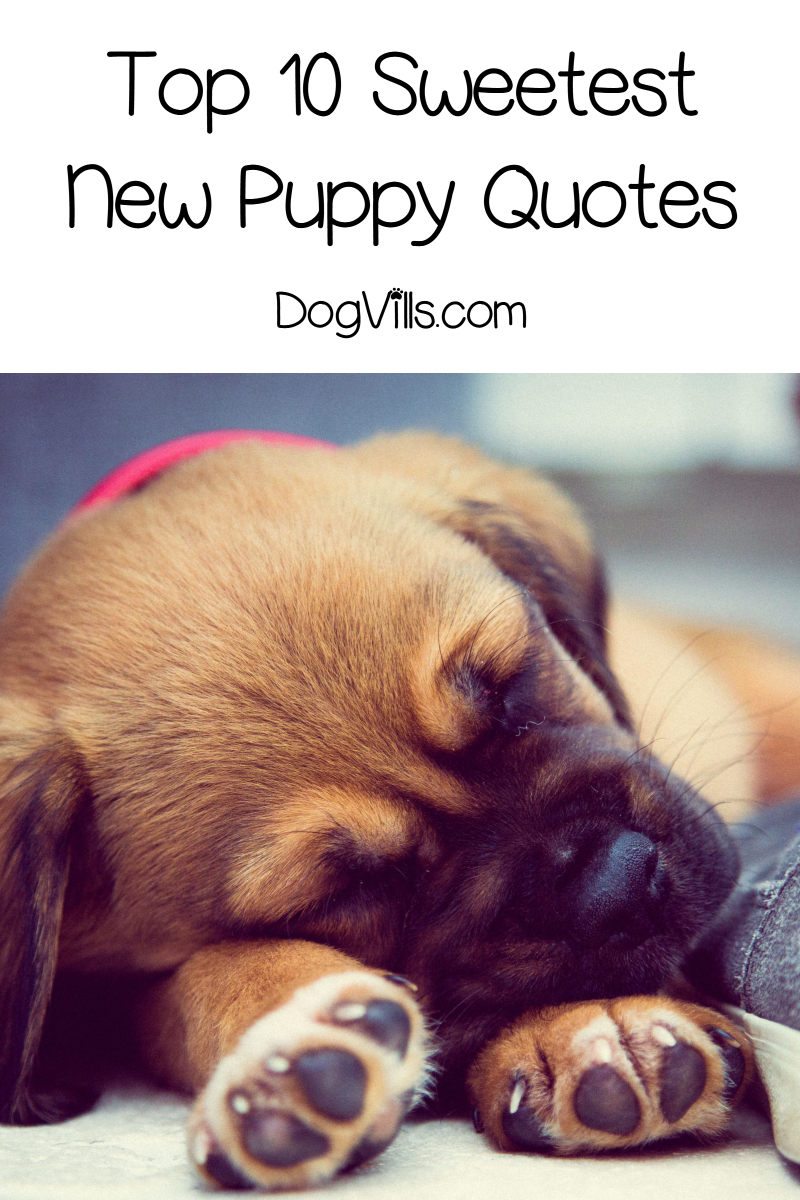 """Top 10 Sweetest """"Welcome New Puppy"""" Quotes"""