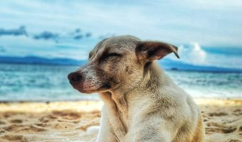 """Saltwater dog names are a fantastic way to go for beach lovers and seaside dwellers! Check out our top 20 favorite """"salty"""" & ocean themed dog names!"""