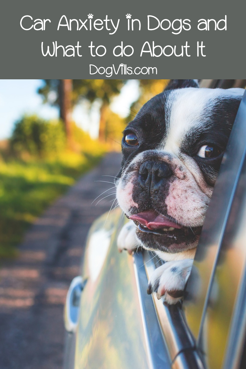 Car Anxiety in Dogs and What to do About It