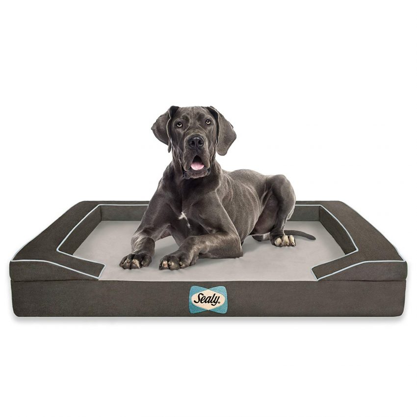 Sealy dog bed for dogs