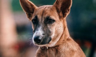 Looking for deaf dog names that are inspired by deaf characters or figures in history? Read on for our top picks for male & female dogs!