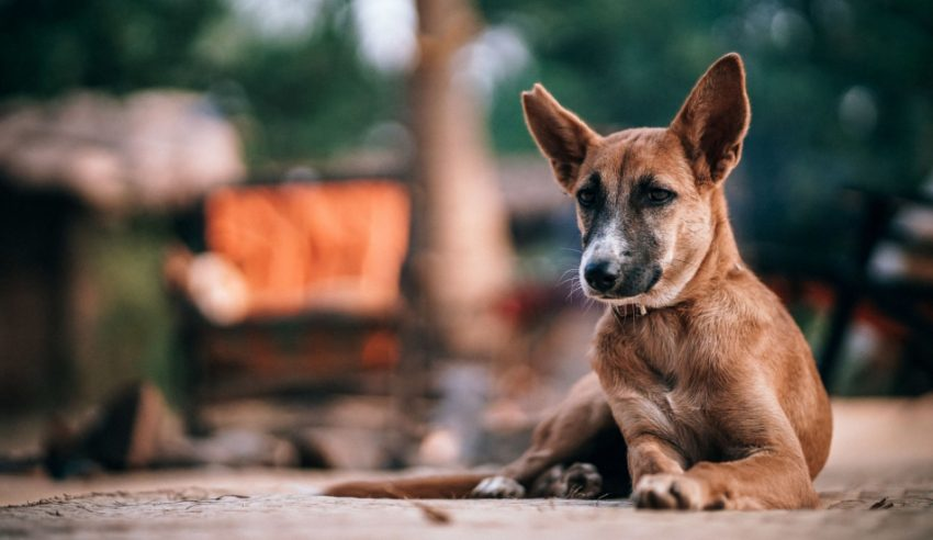 Teaching your deaf dog to stay