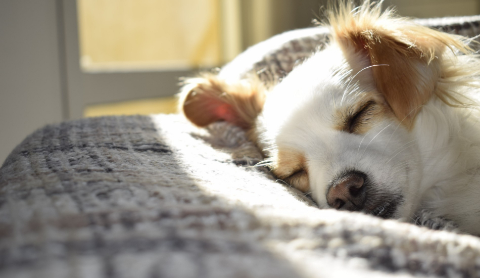 How To Choose The Best Dog Bed For Hip Dysplasia With