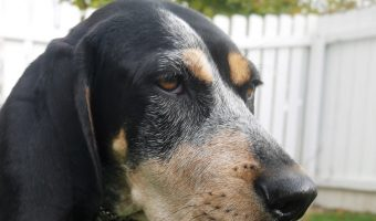 If you're looking for the perfect Treeing Walker Coonhound dog names, you have come to the right place! Check out these 15 names for males & females!