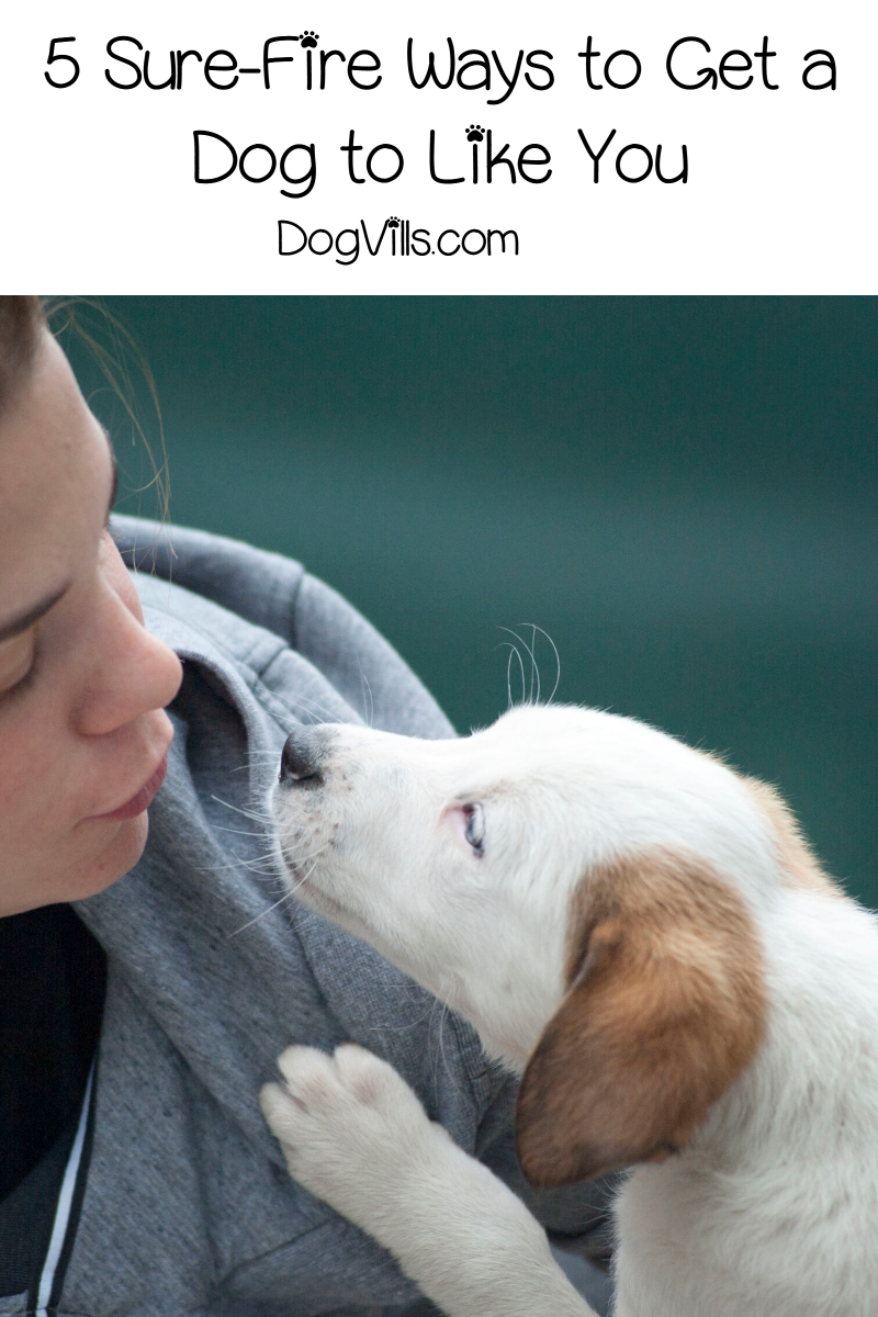 5 Sure-fire Ways to Get a Dog to Like You