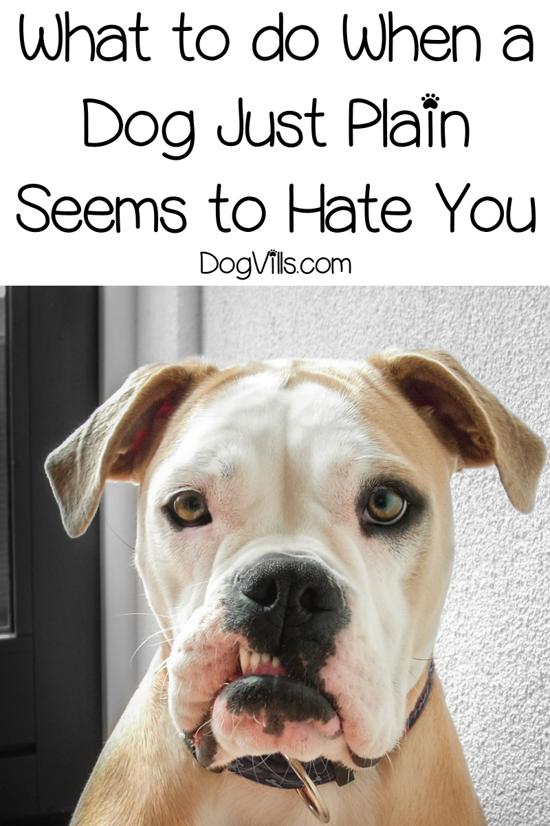 4 Signs Your Dog Hates You & What to Do About It