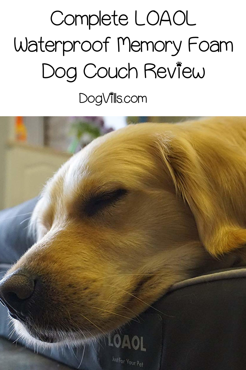 LOAOL Waterproof Memory Foam Dog Couch Review (Definitive Buying Guide)