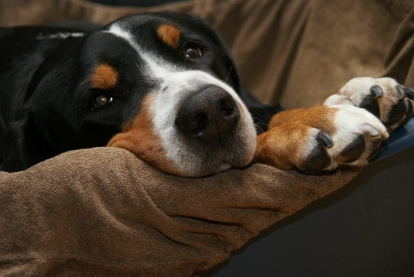Brittle Nails In Dogs A Common Issue With Many Causes