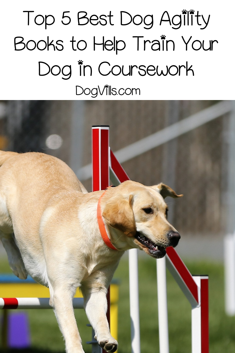 Top 5 Best Dog Agility Books to Help Train Your Dog in Coursework