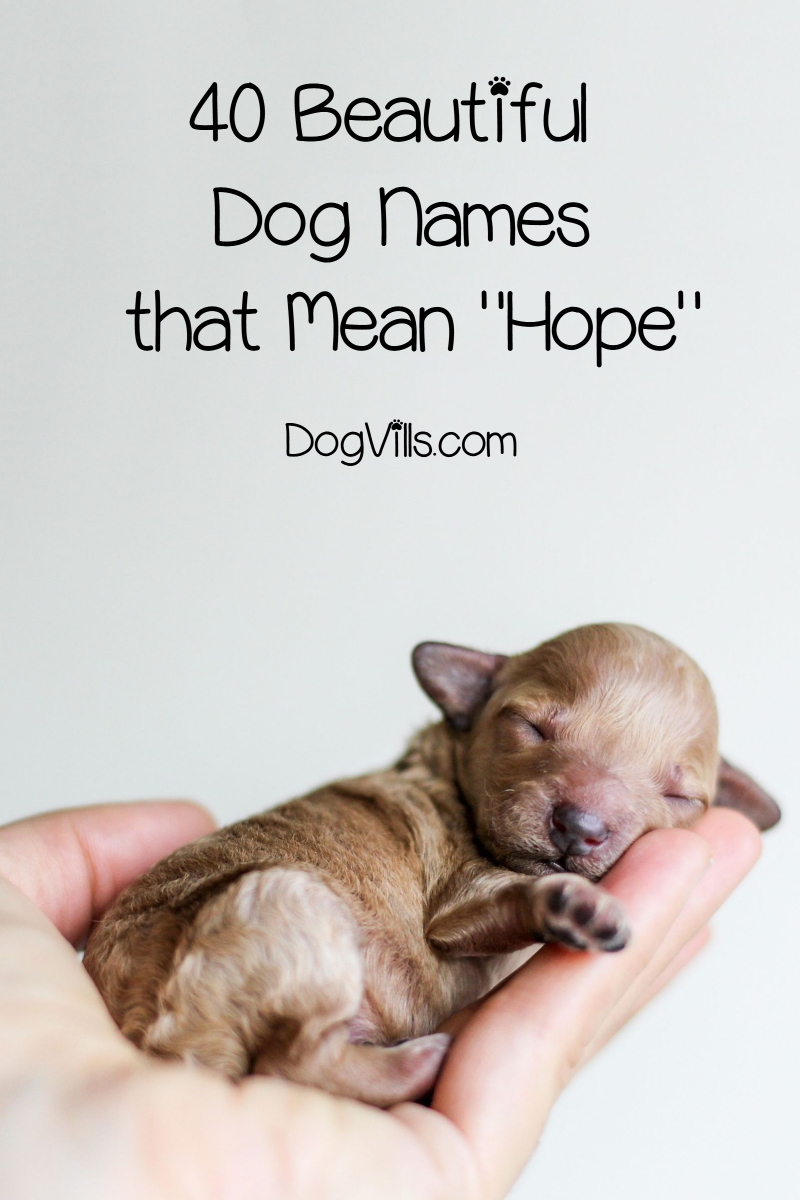 40 Beautiful Dog Names That Mean Hope