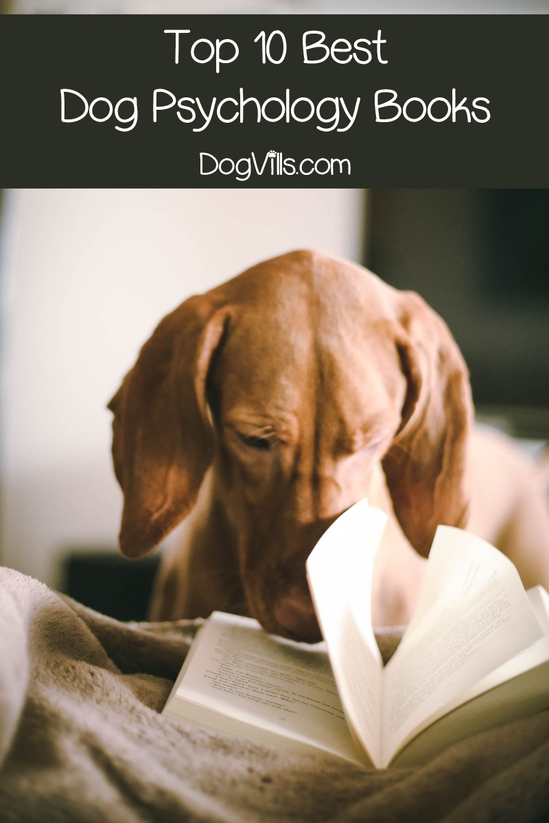 Top 10 Dog Psychology Books Every Pet Parent Should Read