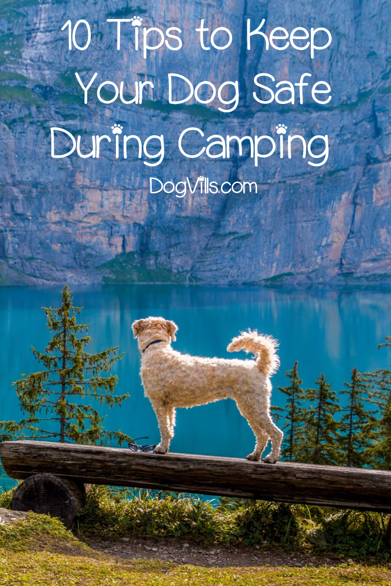 Top 10 Tips to Keep Your Dog Safe During Camping
