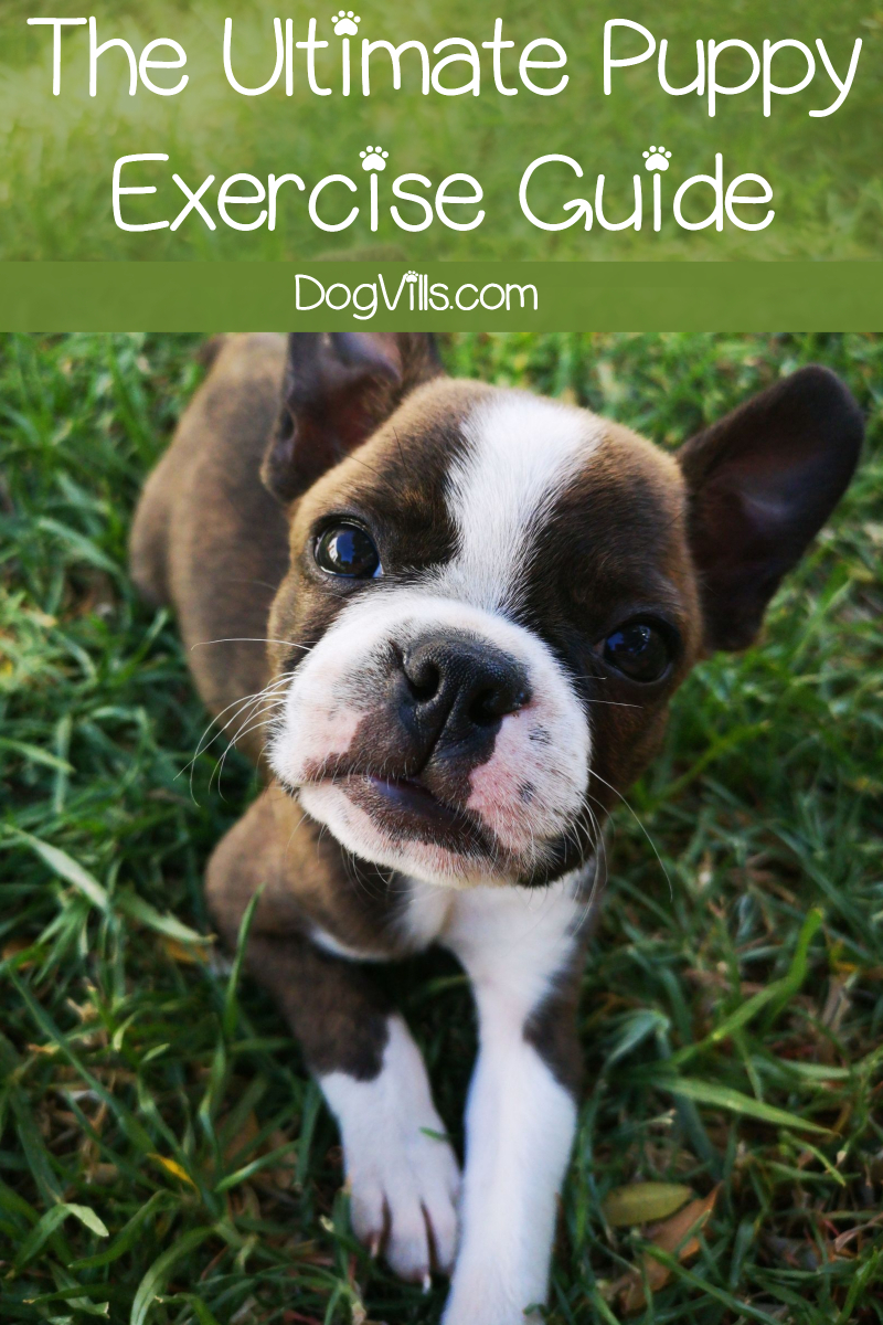 The Ultimate Puppy Exercise Guide