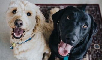 Does gender matter when adopting a second dog? Turns out, it does! Read on to find out what experts say about the subject!