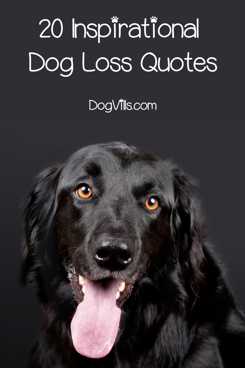 20 Inspirational & Touching Dog Loss Quotes - DogVills