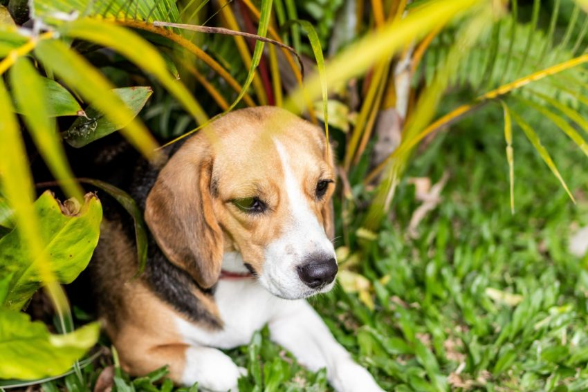 Flea and tick preventative is important for your dog's health, but there are so many. Take a look at this list and discover the most effective treatments!