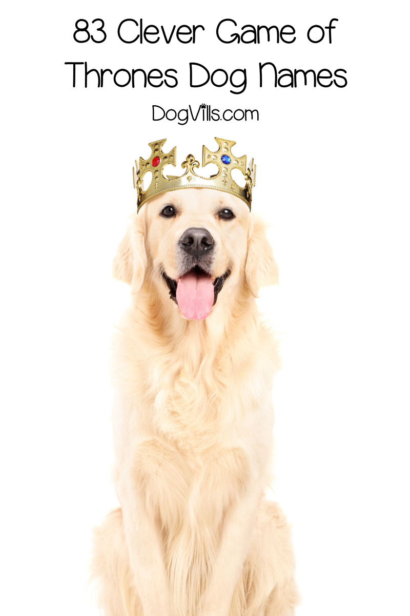 83 Epic Game of Thrones Inspired Dog Names