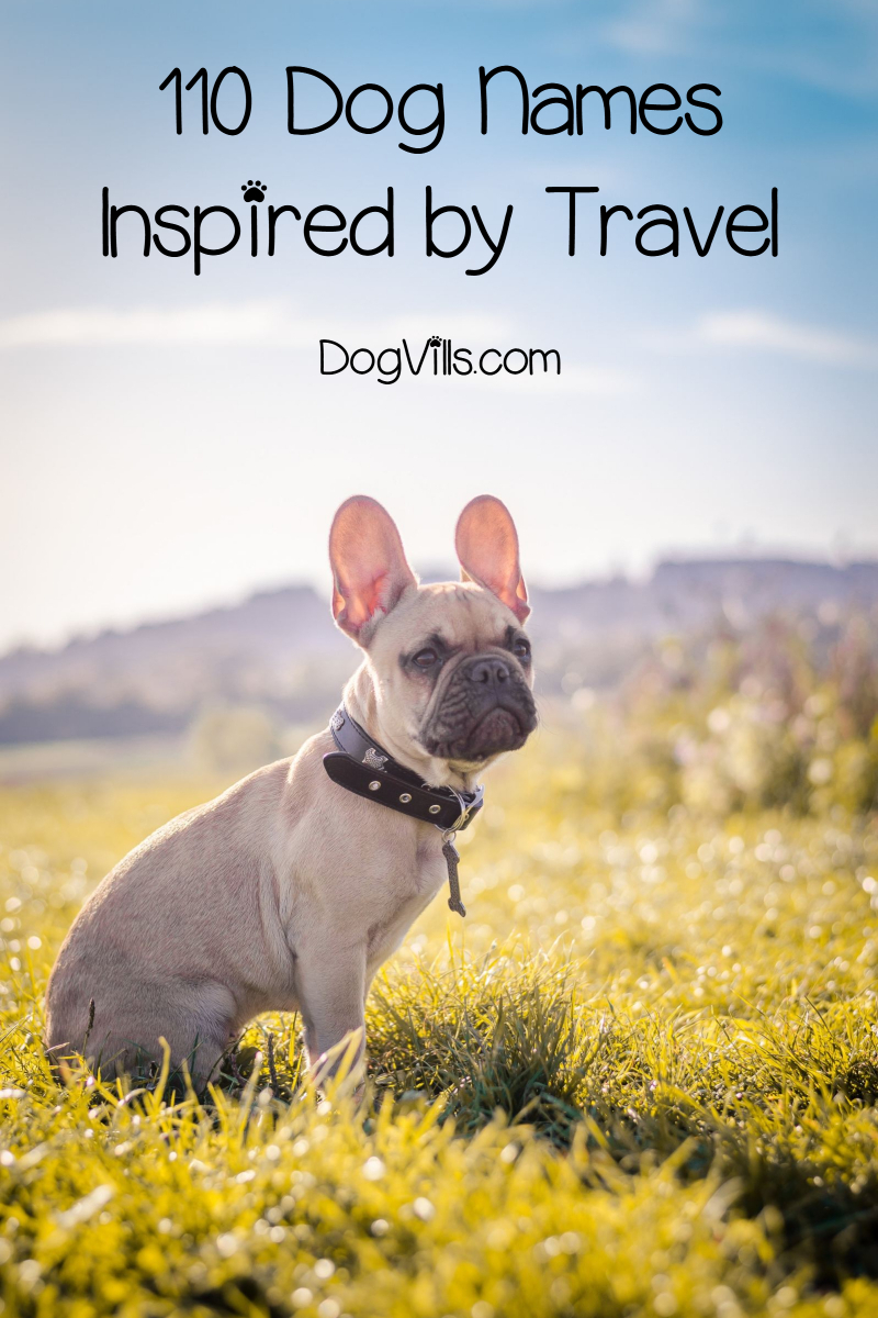 110 Dog Names Inspired by Travel