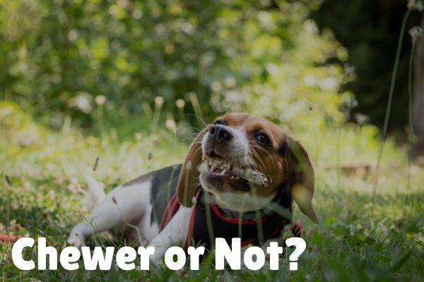 BuddyRest vs. Big Barker Dog Bed Comparison_ Which Is Best_ (1)