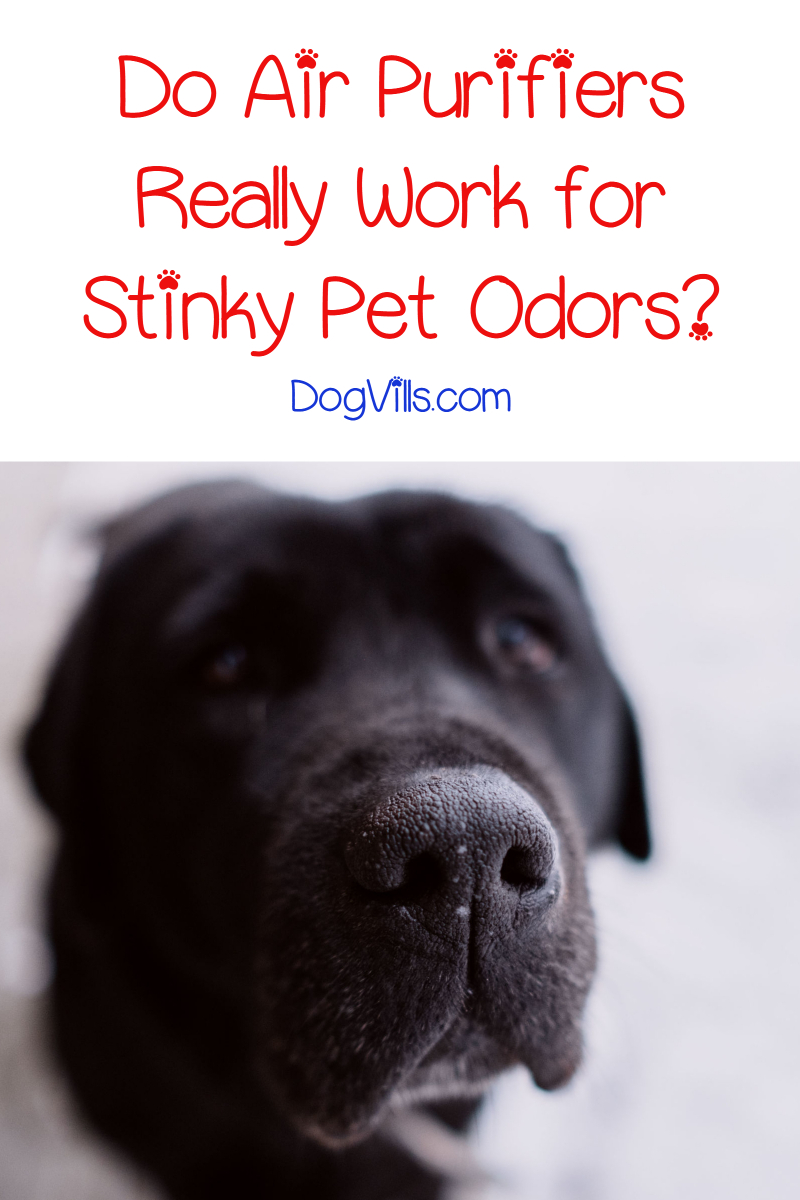 Do Air Purifiers Work for Pet Odors?