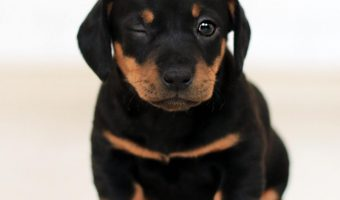 Looking for a judgement-free guide to what you need to know about dog breeding? Read on for what you need to know before you decide if it's right for you.