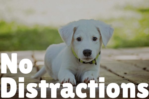 How to Teach a Puppy Their Name in 5 Easy Steps no distractions