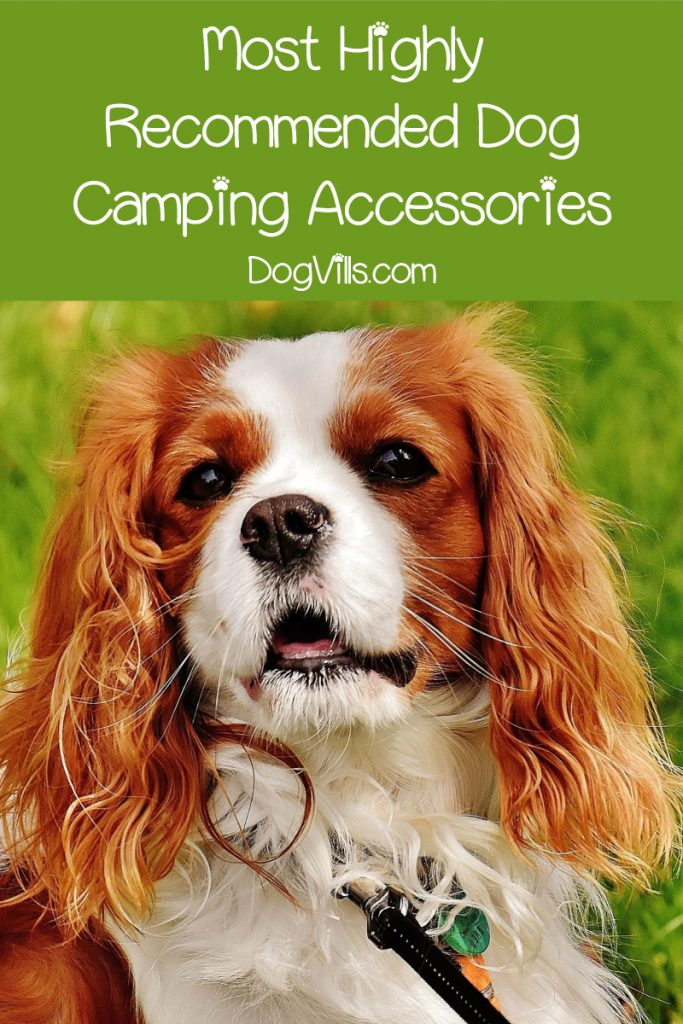 Check out our top recommendations for must-have dog camping gear!