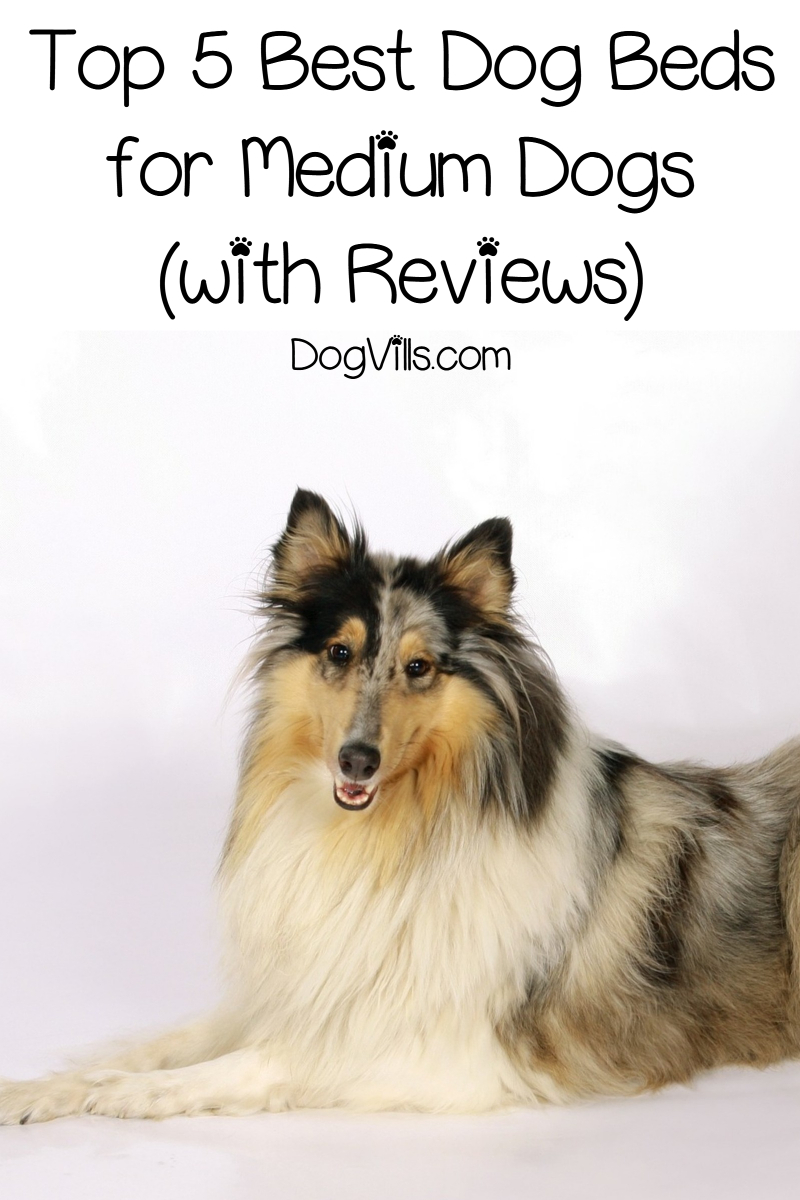 Top 5 Best Dog Beds for Medium Dogs (with Reviews)