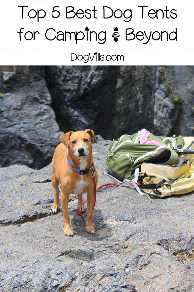 Top 5 Best Dog Tents for Camping & Beyond