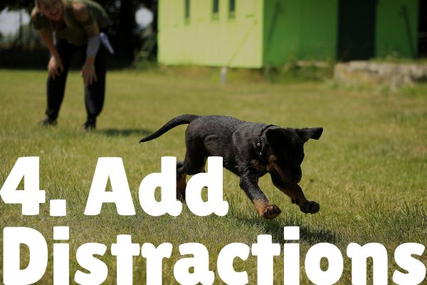 add distractions how to teach puppy their name