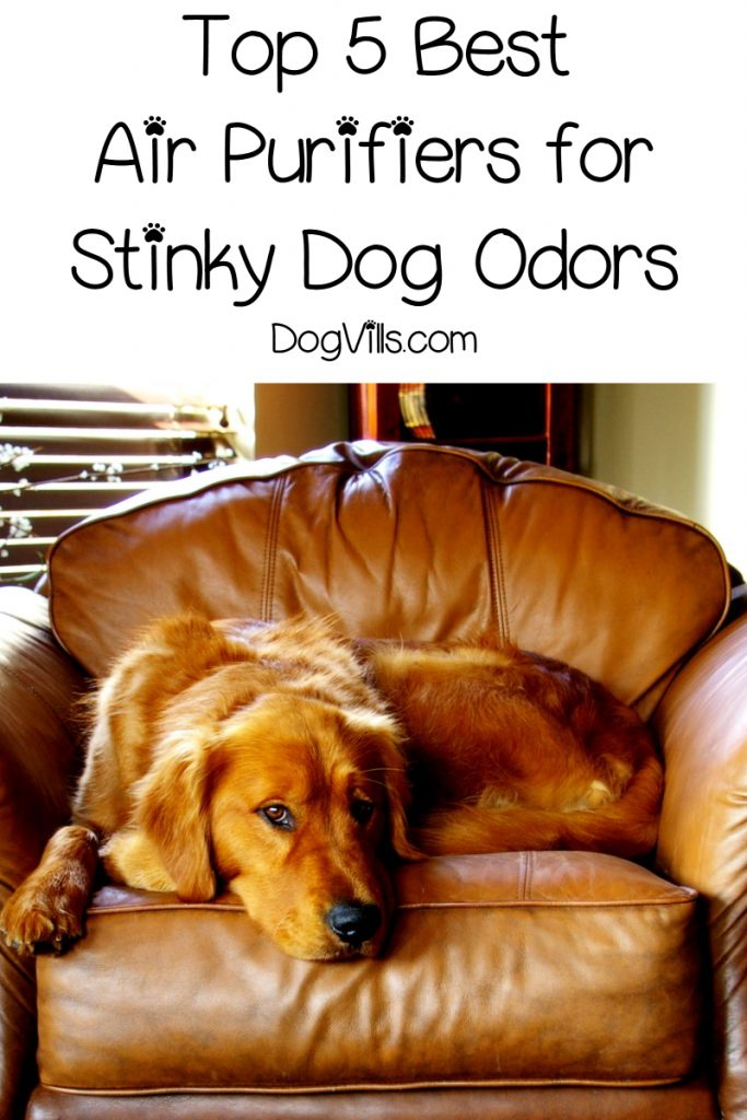 Do air purifiers really work for dog odors? Find out the in-depth answer, plus check out the top five air purifiers for dog smells!