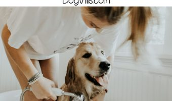Bathing your dog is important for his health, but it's important to know how to do it. Learn how often to do it and tips on getting the job done right!