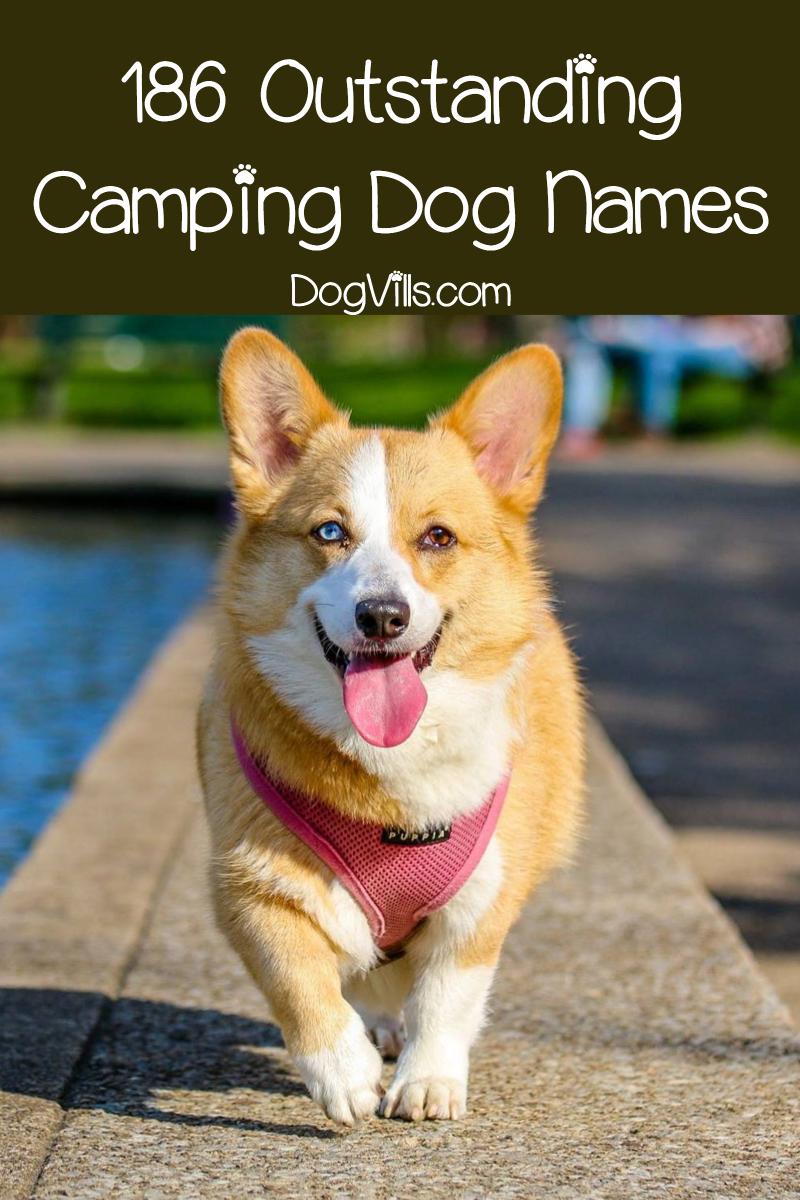 186 Camping Dog Names
