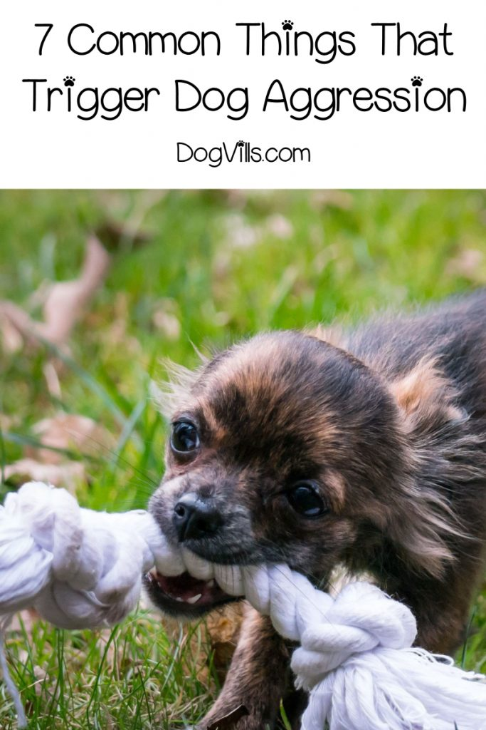 Are you wondering about dog aggression triggers? If your dog is acting aggressively or protectively, read on for 7 things that could be setting him off!