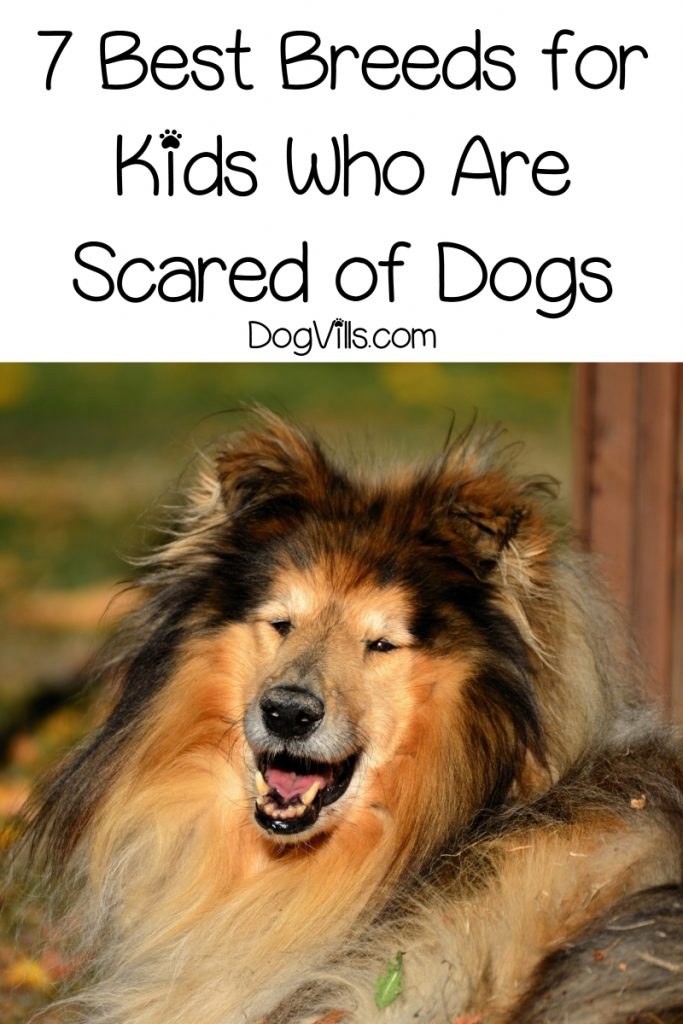 Are you wondering about the best dog breeds for scared children? Read on for our top 7 picks!