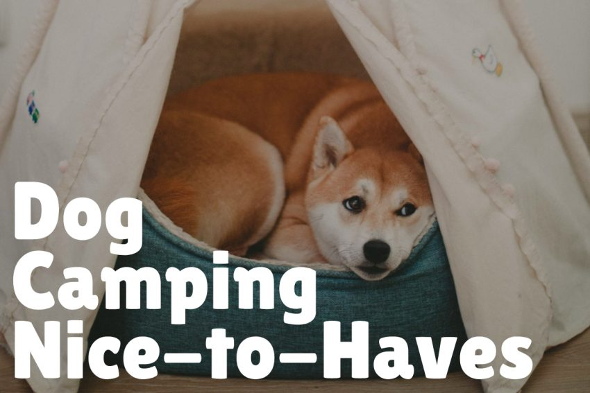 Sure, you can have a successful camping trip with your dog without these items below, but they sure do make things easier!