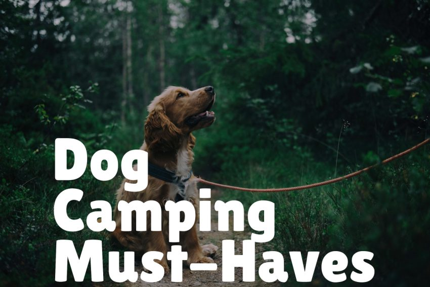 dog camping gear list must haves
