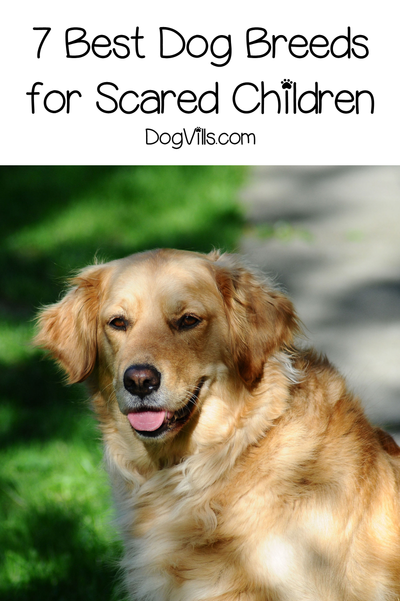 7 Best Dog Breeds For Scared Children