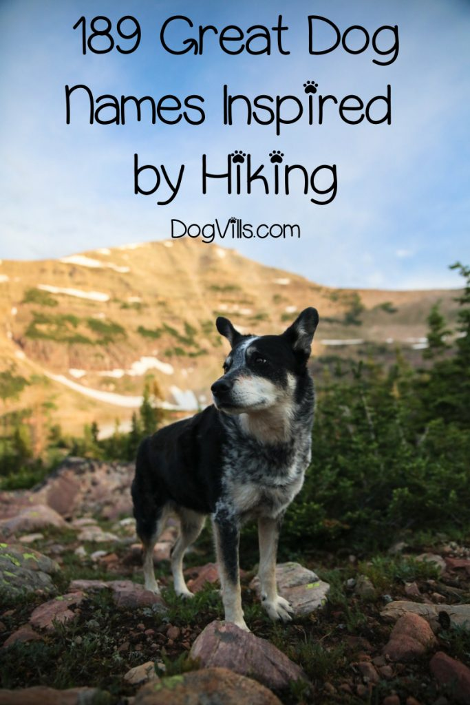 If you're looking for the best hiking dog names, you're going to love this list! Check out over 180 brilliant ideas for male and female dogs!
